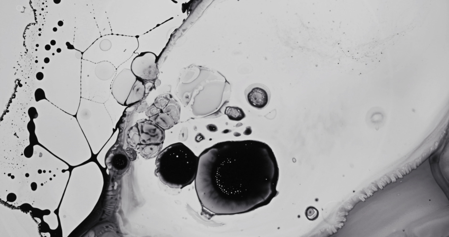 Black and White liquid ink / paint drop stain on white paper background / paint bleed Bloom, with circle organic flow expansion, splatter spreading on pure backdrop texture \ petri dish | Shutterstock HD Video #1035028991