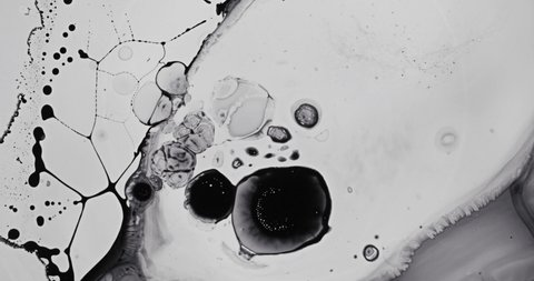 Black and White liquid ink / paint drop stain on white paper background / paint bleed Bloom, with circle organic flow expansion, splatter spreading on pure backdrop texture \ petri dish