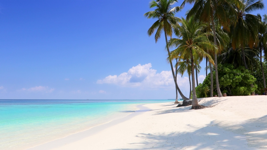 Panoramic view of a tropical beach with palm trees, turquoise waters and blue sky in the Maldives, Indian Ocean | Shutterstock HD Video #1035051971