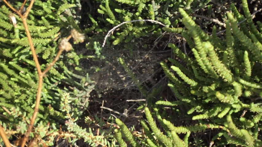 Close up of spider web outdoors. White threads of cobwebs on sunny day in grass on green field | Shutterstock HD Video #1035171791