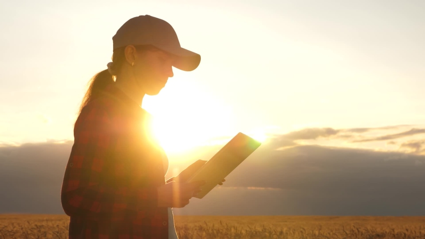 Farmer woman working with a tablet in a wheat field, in sunset light. business woman in field of planning her income. Woman agronomist with tablet studies wheat crop in field. agriculture concept. #1036020881
