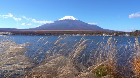 Static Shot Of Mount Fuji In The Distance From Between The Dry Shrubs