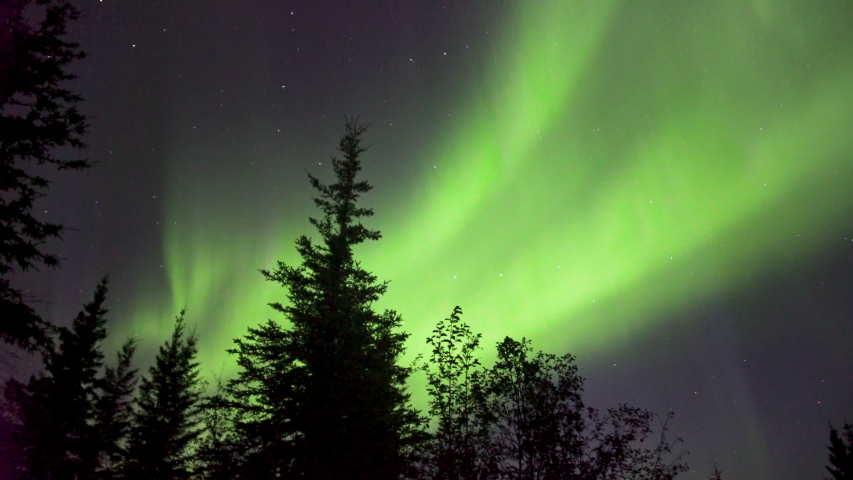Realistic real time (not timelapse) aurora borealis (northern lights) dancing over trees in Alaska | Shutterstock HD Video #1036463021