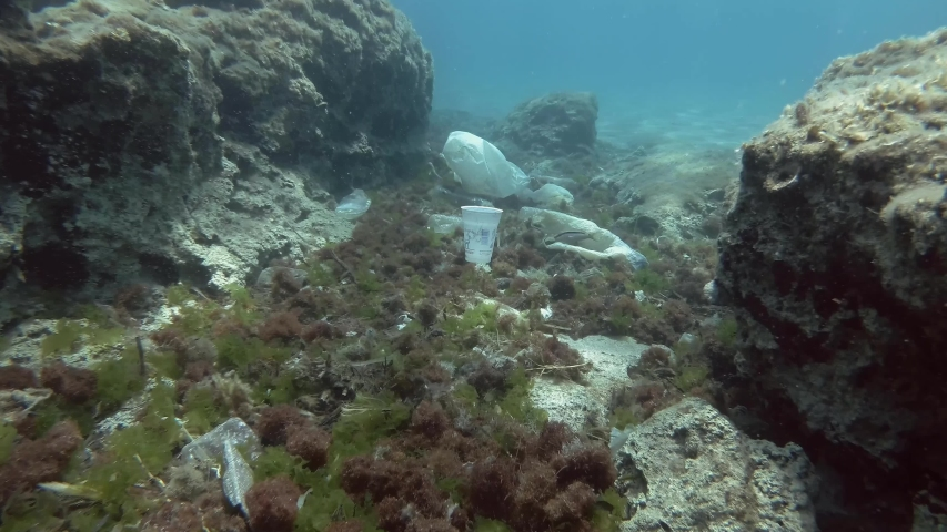 MEDITERRANAEAN SEA, GREECE - AUGUST 2019: Slow motion, white plastic cup slowly sinks to the bottom covered with a lot of plastic debris. Plastic pollution, Plastic bottles, bags and dishes on the sea | Shutterstock HD Video #1036476521