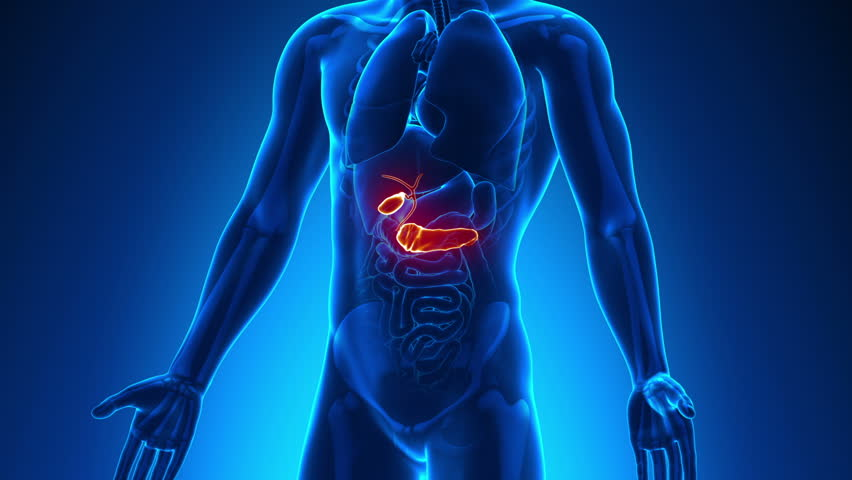 Male Anatomy Human Gallbladder Stock Footage Video 100 Royalty