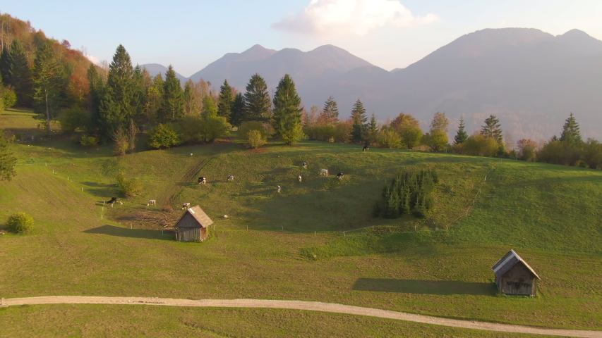 AERIAL: Flying over a small herd of cattle grazing and towards the town of Bohinj in fall. Picturesque view of the Slovenian countryside on a beautiful autumn morning. Idyllic rural landscape in fall | Shutterstock HD Video #1038002141