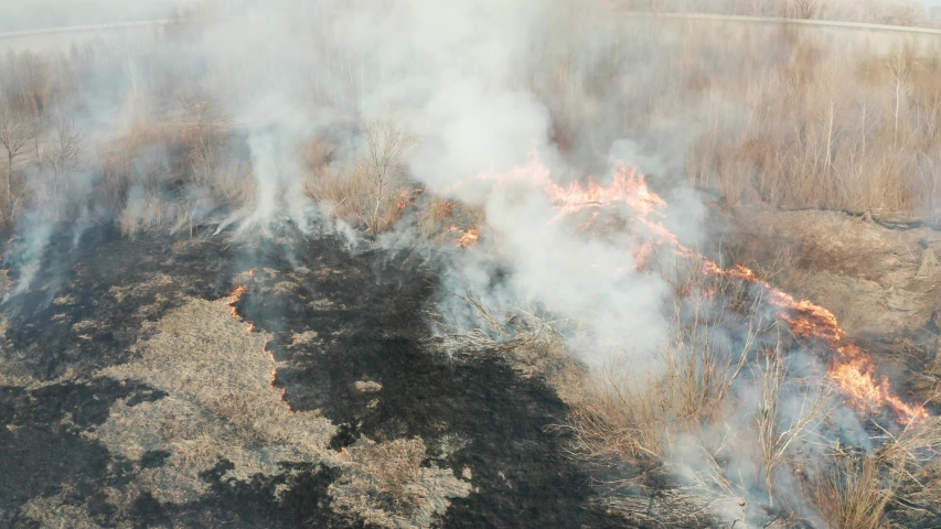 Forest fire, large flames and smoke from forest fire at spring aerial video #1038052121