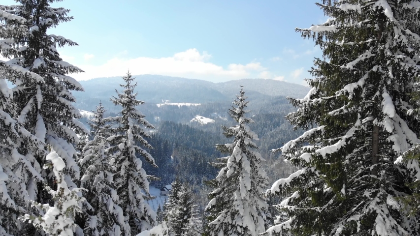 Drone footage snow covered trees, winter nature beautiful Europe aerial view pine forest mountain, season travel white frozen nature idyllic   Shutterstock HD Video #1038544931