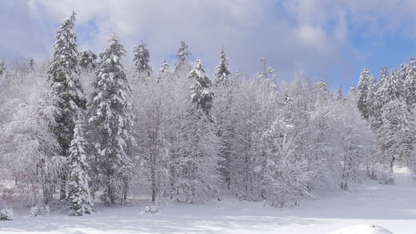 Snow and windy day in mountains. Bakuriani forest. | Shutterstock HD Video #1038731711