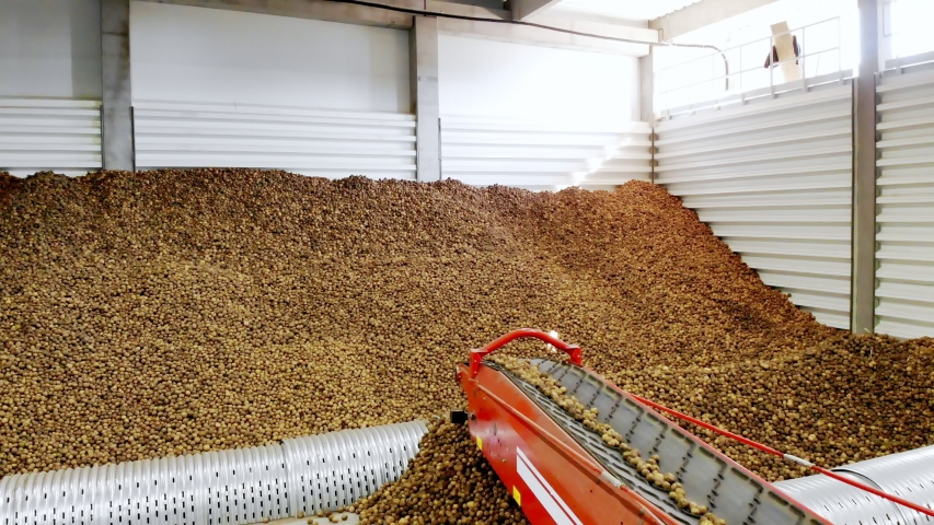 Close-up, Potatoes move on special conveyor machinery belt and fit into a storage room, a warehouse for winter storage. potato harvesting, crop | Shutterstock HD Video #1038773891
