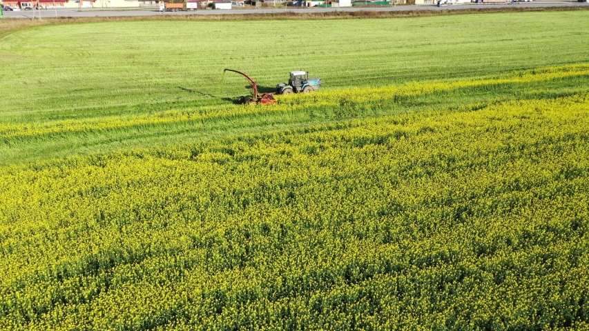 Agricultural machinery during work. The combine mows the yellow rape | Shutterstock HD Video #1039036211