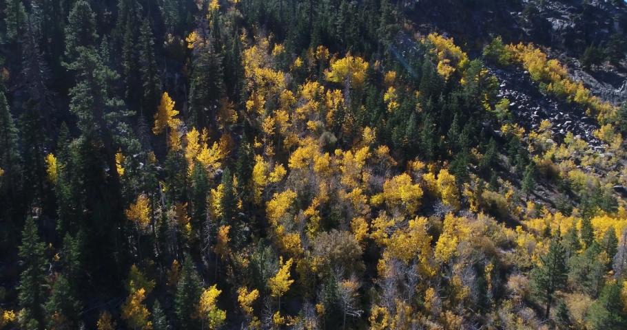 Aspen Grove in mountainside 4k | Shutterstock HD Video #1039342811