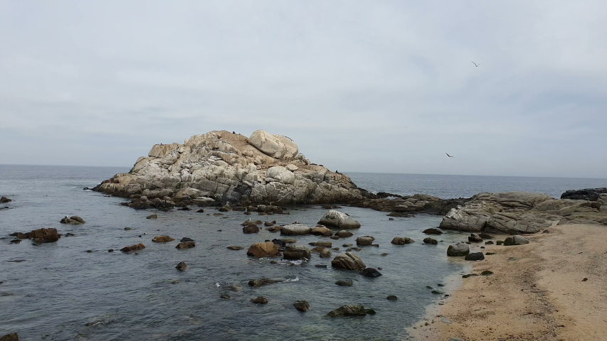 Seagull group resting on stones at Vina del Mar beach | Shutterstock HD Video #1039635401