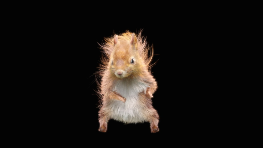Squirrel Dance CG fur 3d rendering animal realistic CGI VFX Animation Loop  composition 3d mapping cartoon, with Alpha matte | Shutterstock HD Video #1039834781