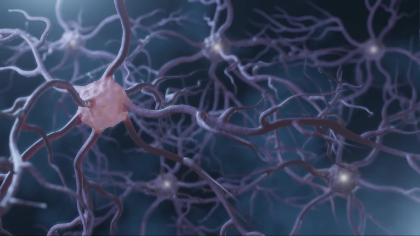Neuronal and Synapse Activity animation. Neurons in the head, neuroactivity, synapses, neurotransmitters, brain, axons. Electrical impulses inside the human brain. | Shutterstock HD Video #1040689661