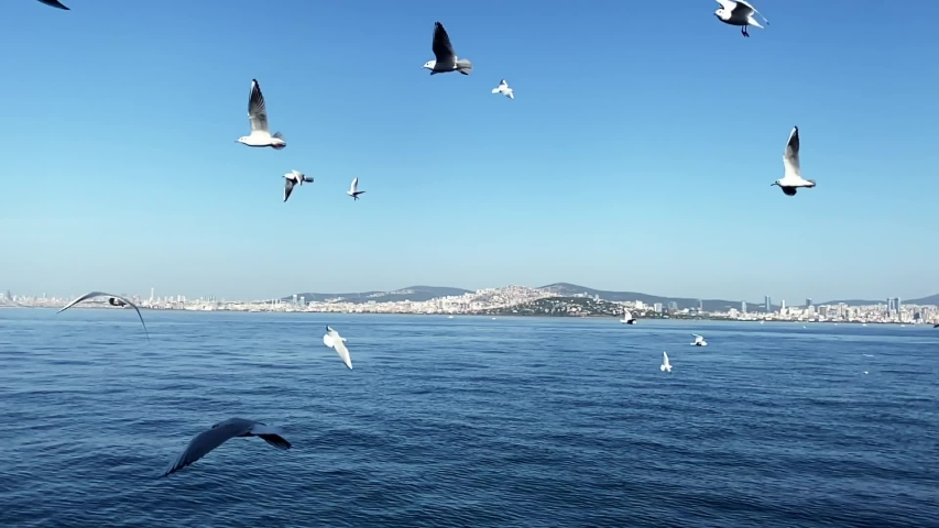People are feeding seagulls while ferry moves | Shutterstock HD Video #1041091951