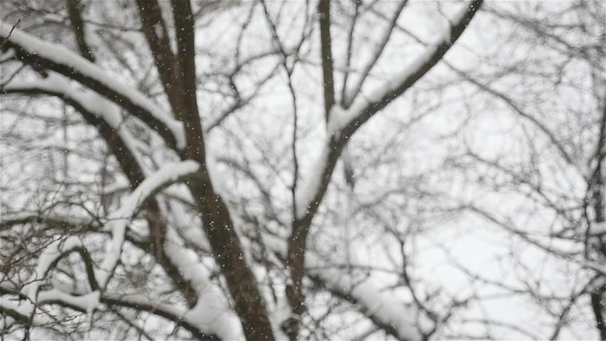 It's snowing outside. Winter season. Blurred silhouette of a man walks in the background. Slow motion | Shutterstock HD Video #1041100651