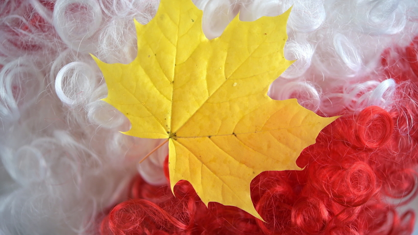 Canadian symbols, real maple leaf over the red and white colors of the flag | Shutterstock HD Video #1041115681