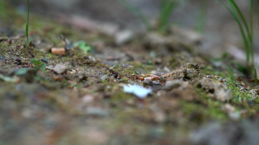 Ants quickly crossing through path | Shutterstock HD Video #1041300661