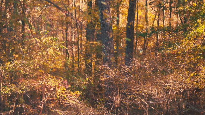 Beautiful Autumn nature background featuring a deep, golden forest in the Ozarks. | Shutterstock HD Video #1042961701