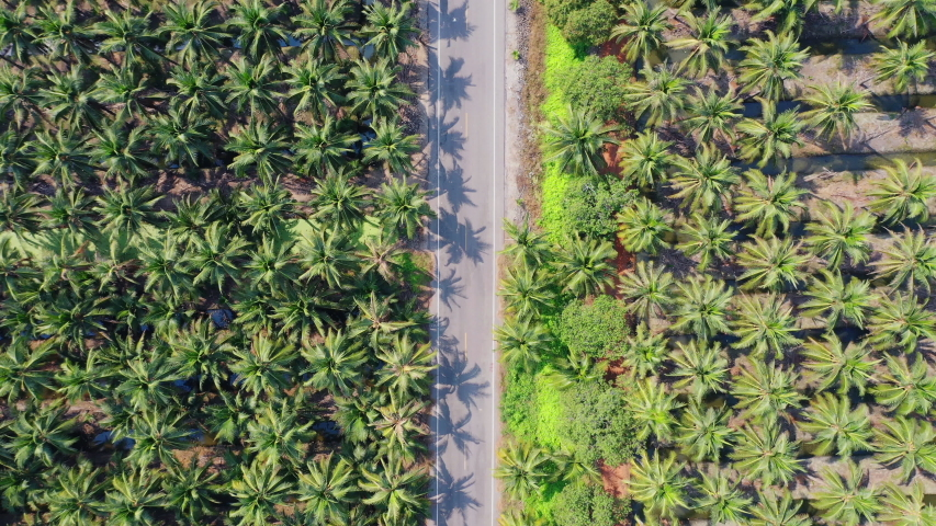 Aerial view of coconut farm in Samut sakhon province,Thailand | Shutterstock HD Video #1044830281