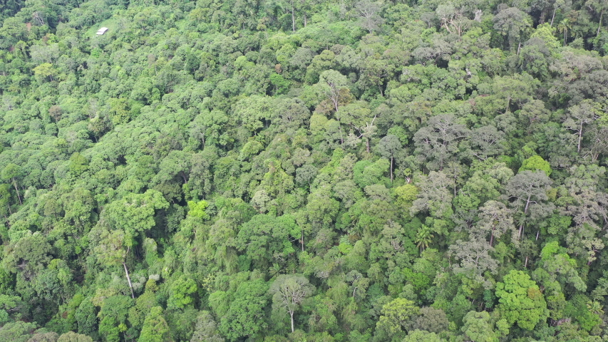 Aerial view sustainable Sapulut Forest Reserve, the natural Borneo Rainforest in Nabawan, Sabah, Malaysia. | Shutterstock HD Video #1044903991