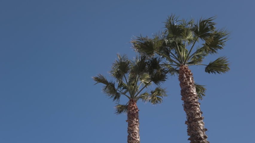 Two tall palm trees against a clear blue sky, shot from below.   Shutterstock HD Video #1046847421