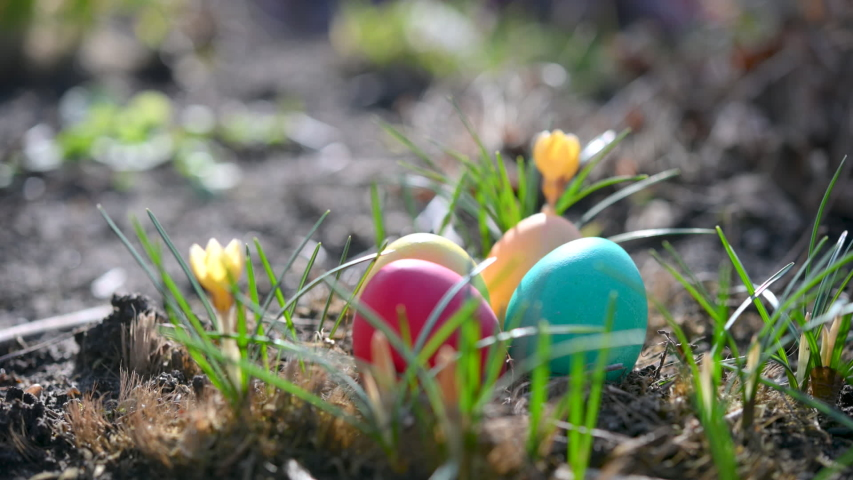Children's hand takes colorful easter eggs from a meadow. Easter Egg Hunt. Easter concept background. | Shutterstock HD Video #1047521251