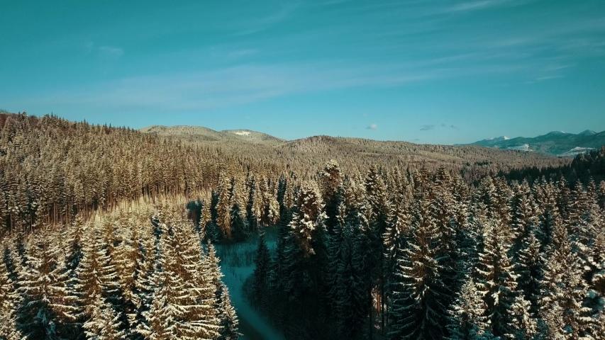 Carpathian pine forest aerial video 4K snow winter. | Shutterstock HD Video #1049616841