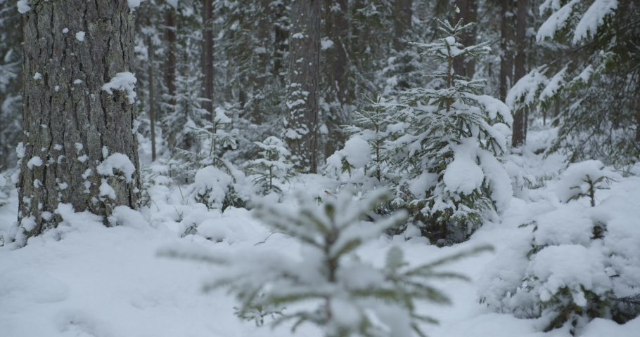 White fresh snow covered wild forest in winter with slider movement | Shutterstock HD Video #1049946391