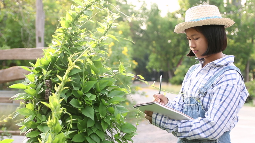 Young little girl writing on notebook to record exuberant green vegetables in the farmimg. Learning of grown non-toxic vegetables for eating in the family. In the evening. Education concept. | Shutterstock HD Video #1050020371