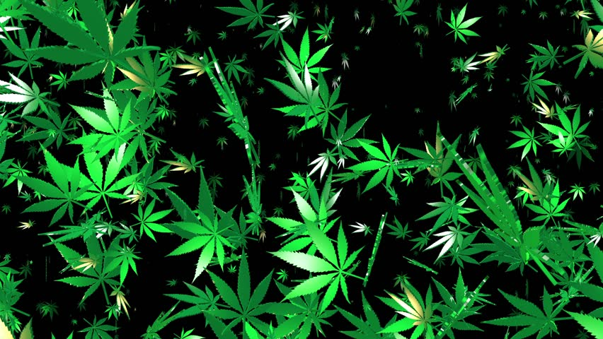 flying cannabis leaves on black stock footage video 100