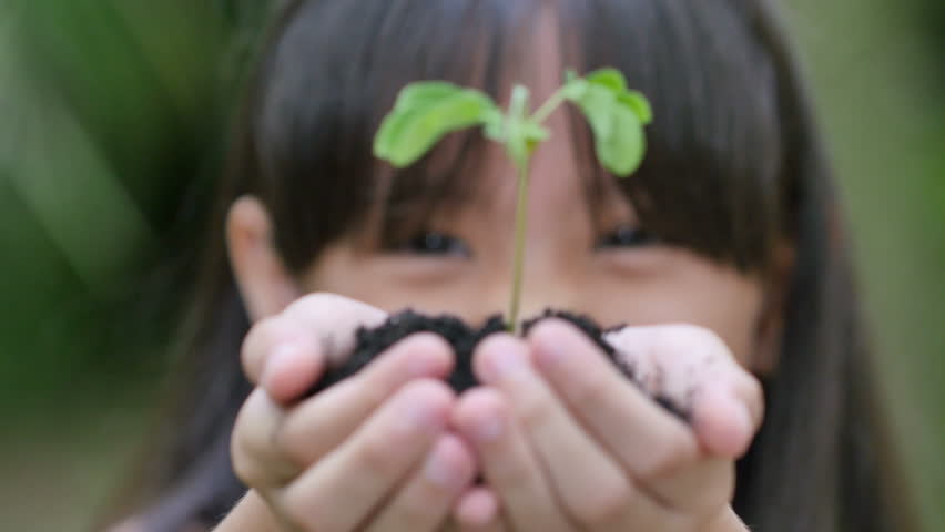 Close up of Asian child holding a little green plant