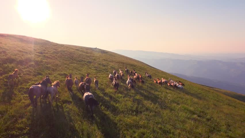 Aerial Wild Animals Wild Horses Galloping On Meadow Hill Mountain Nature Outdoors Animals Wilderness Nature Scenery Sunset Shining Freedom | Shutterstock HD Video #11129171