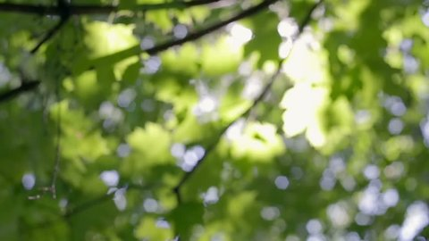 Fresh verdure, sunlight through the leaves, sunshine filtering through foliage