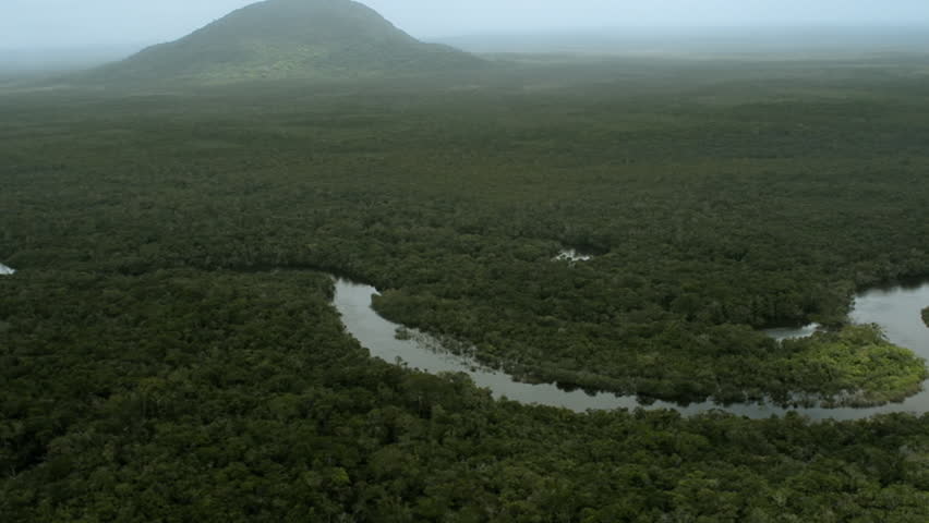 Aerial view of the Amazon rain forest, the largest forest in the world