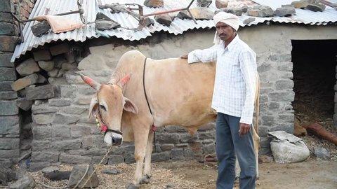 Farmer with his bull, rural village Salunkwadi, Ambajogai, Beed, Maharashtra, India
