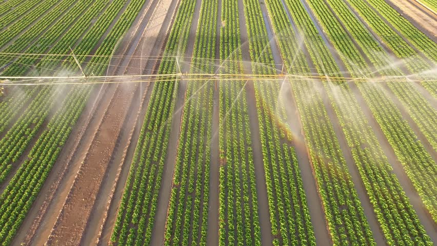 Aerial video footage of a irrigation plant watering a salad field. Summer 2015 in Germany. UHD / 4K resolution from a kopter.   Shutterstock HD Video #11370941