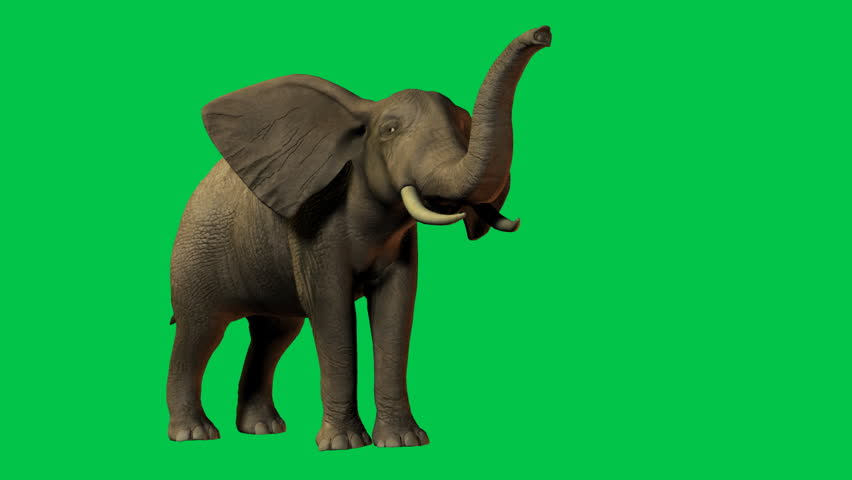 African Elephant eating and moving. Original Green screen animation