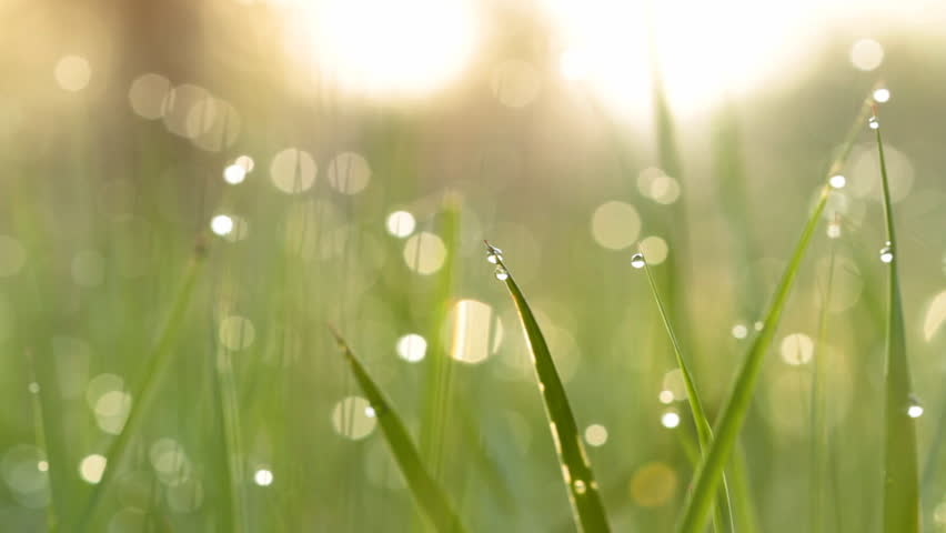 Blurred grass background with water drops.     Shutterstock HD Video #1161901