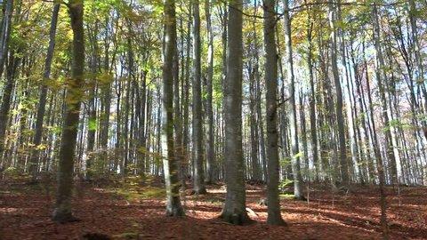 Drive through autumn woods, forest trees seen through car window