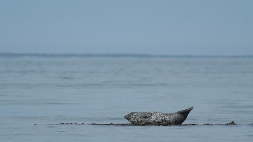 Seal at the ocean on a stone | Shutterstock HD Video #11866736