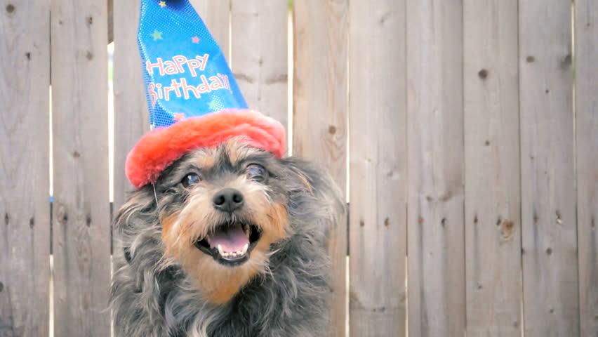 Cute Little Dog Wearing Happy Stockvideos Filmmaterial 100