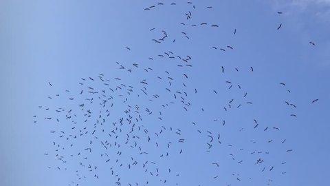 shadoof, crane, shadoof fly, shadoof in blue sky, flock shadoof,1080p