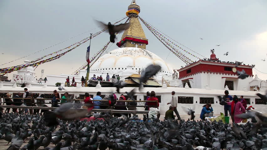 buddhist single men in birds landing The spiritual meaning of birds:  brown birds are linked to healing and good health birds that are black and white in color means that trouble will be avoided.