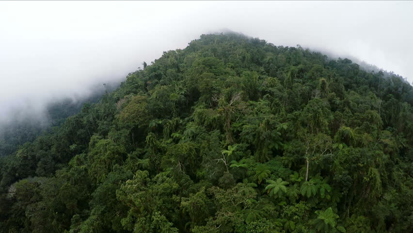 Aerial , the bird's-eye view of the jungle of morning mist
