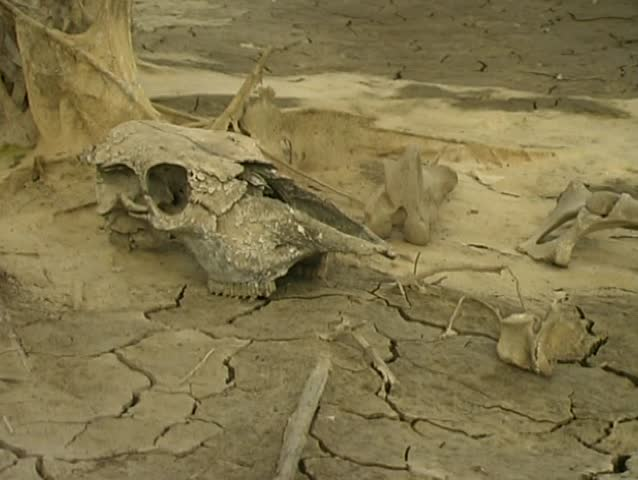 Animal bones pan to dry waterhole