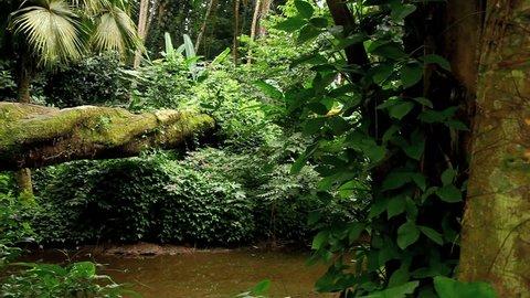Rio de Janeiro, Brazil, atlantic forest