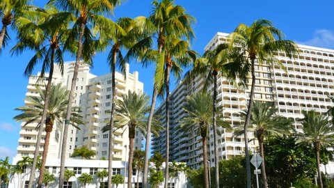 Bal Harbour with palm trees