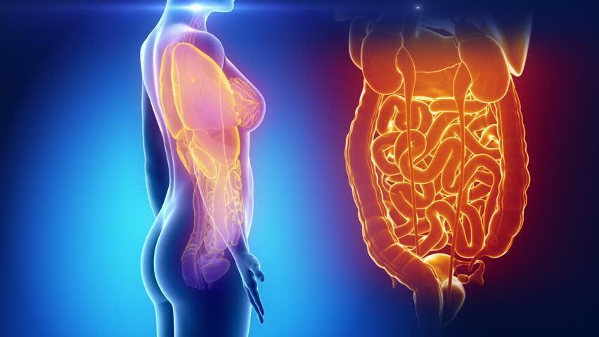 Female Organs Anatomy In Blue X Ray Loop Stock Footage Video 1332484